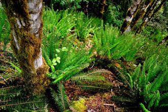 Photo: a ferny descent