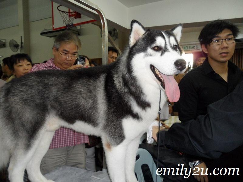 MKA dog show Perak