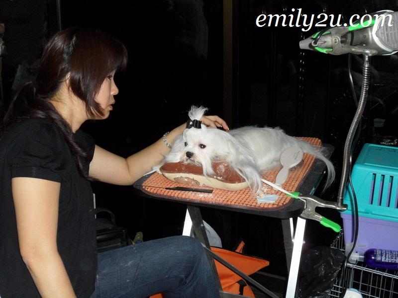 MKA dog show Ipoh Perak