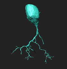 Photo: Beginning to map a new neuron on eyewire.org