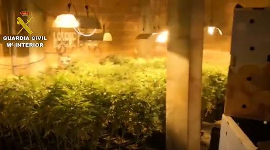 Descubren que tienen más de 300 plantas de marihuana en Fondón