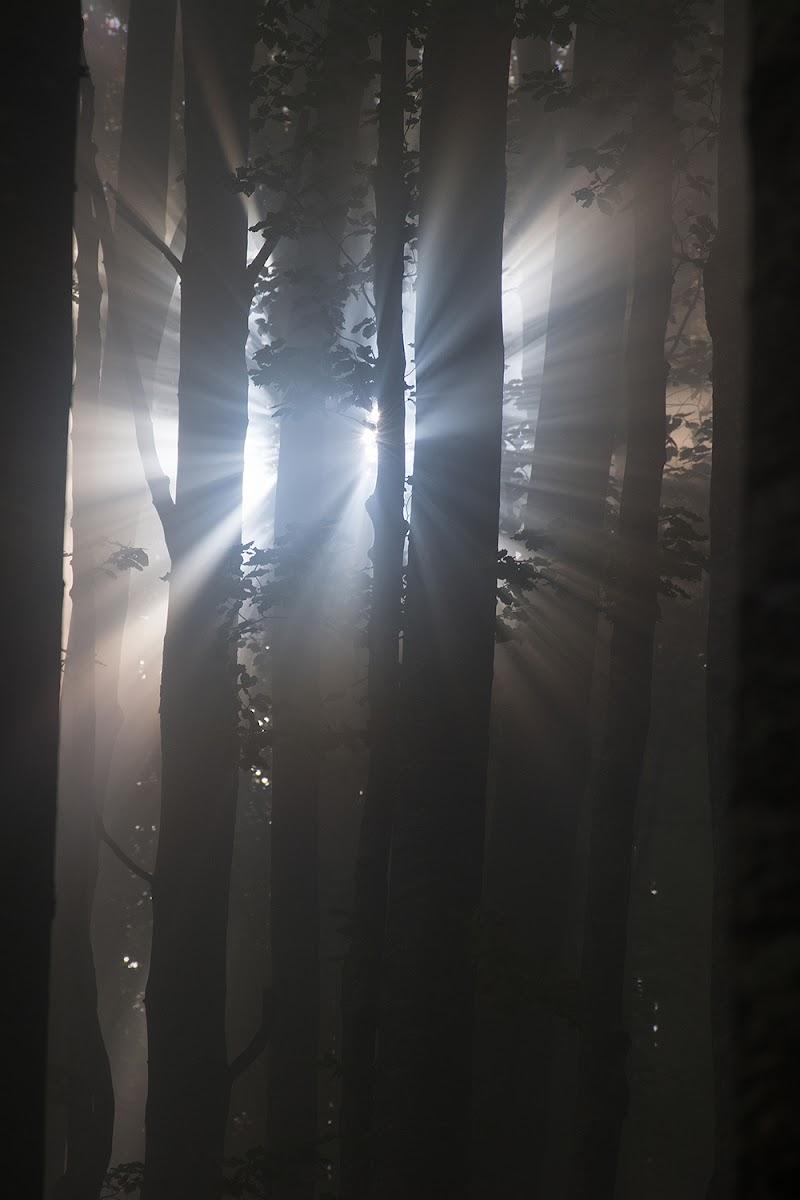 Raggi di luce nel bosco di LucaMonego