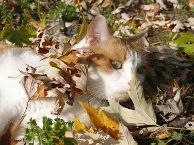 I colori dell'autunno... di DarkLady
