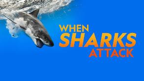When Sharks Attack thumbnail