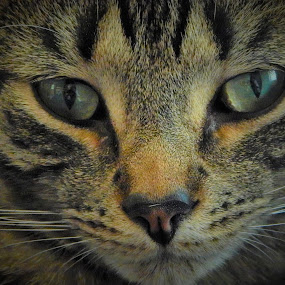 Floki_2 by Michelle Kelly - Novices Only Pets (  )