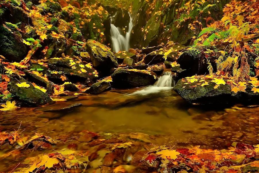 Vavřincův stream by Pavel Klučar - Landscapes Waterscapes