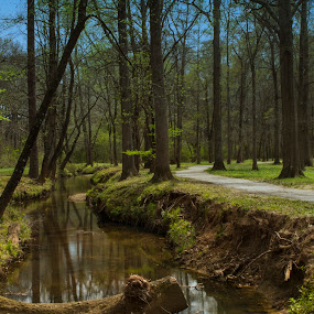 Heath Park by Thomas Vasas - Landscapes Travel ( nature, scenics, travel, landscapes )