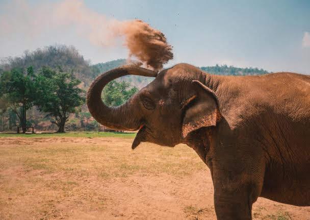 Chiang Dao Elephant Camp