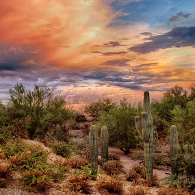 Spring Break by Charlie Alolkoy - Landscapes Deserts ( clouds, desert, sunset, arizona, tucson, weather, sunrise, storm, cactus,  )