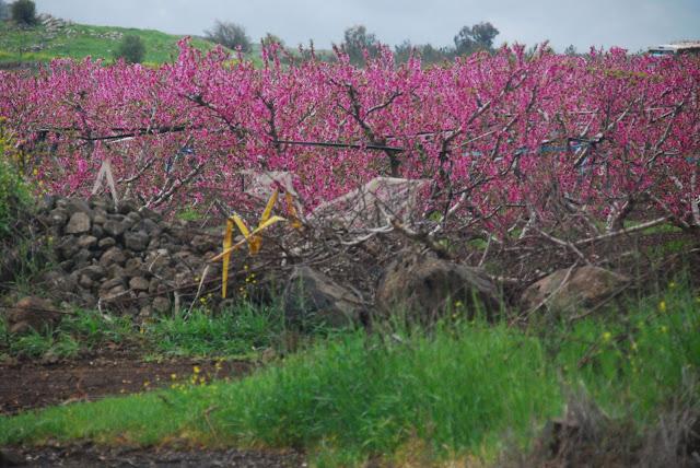 صور من الضفة الغربية والقدس بعيون كاميرا امواج الاندلس DSC_6519