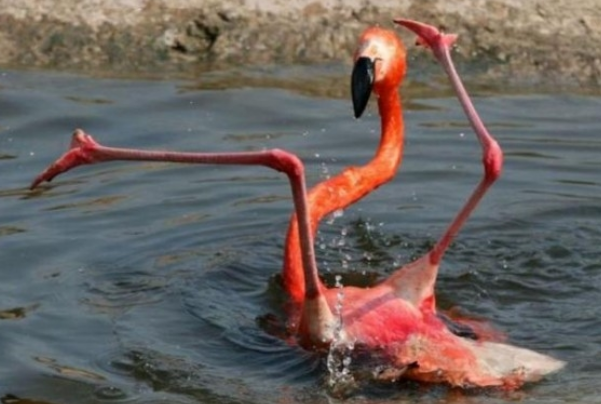 Um Flamingo da torcida Flagay