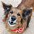 Ver el Diario de Verdi, el perro