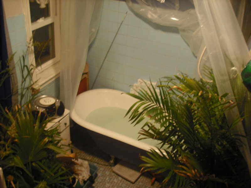 """Photo: May dub my bathroom """"The Oasis"""" for the duration of Irene. Palm plants in from the deck. Tub filled with a back-up supply of water. I will soak in that water if we avert the apocalypse and it goes unused."""