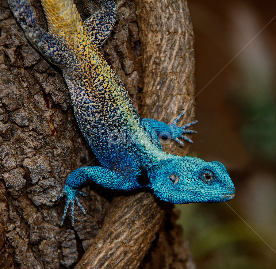 by Nobby Clarke - Animals Reptiles (  )