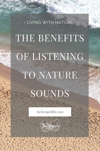 The Benefits of Listening to Nature Sounds ft. My 3 Favourite Nature Inspired Spotify Playlists | Living with Nature by The Foraged Life
