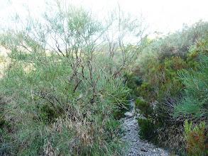 Photo: El camino se hace más angosto entre matorrales