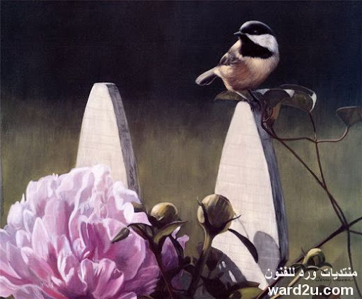 رسومات لحكاية حنين بين الطبيعه والعصافير