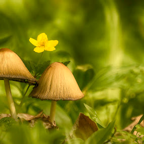 Fairytale mushrooms by Diana Toma - Nature Up Close Mushrooms & Fungi ( mushroom, green, forest, leaves, flower )