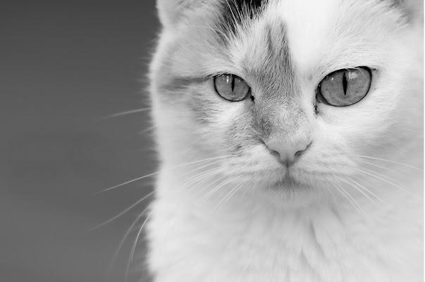 Little Big Eyes di letiziacaprettiphotography