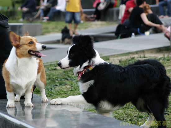 生活照:「四號公園」,狗狗遊樂場