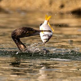 Heyyyy. I got it... by Ramakrishnan Sundaresan - Animals Birds