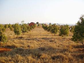 Photo: Plantation, 2010
