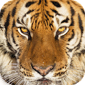 Wildlife Quest Ultimate Tiger