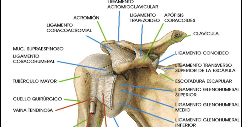 ESPACIO, AMOR Y LOCURA: Hombro Inestable -III- Subluxacion y ...