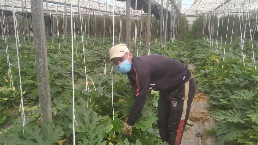 Mohamed El Jaffoufi ha sido contratado para trabajar en un invernadero.