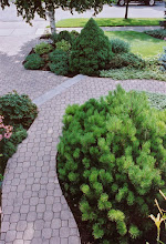 Photo: We kept the old stone, reworked it into curves and molded the step from two timber steps into one stone step. We kept what plantings we could and upgrades the rest.