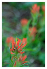 Photo: Eastern Sierras-20120716-358