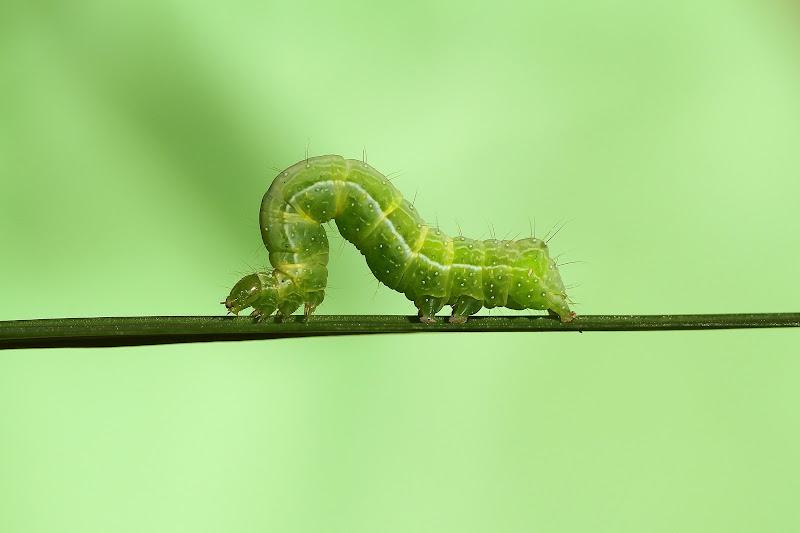 verdi sfumature  di Andrea Fontana