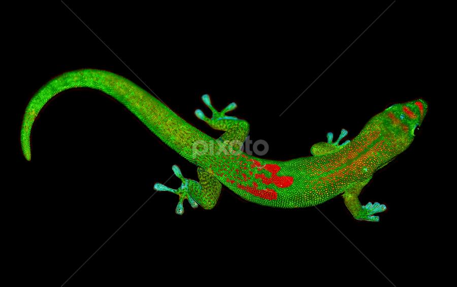 by Heather Osborn - Animals Reptiles