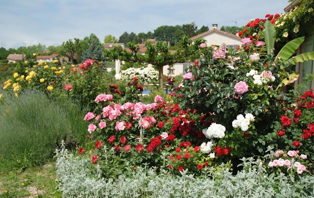 plantes vivaces couvre sol page 3 au jardin forum de jardinage. Black Bedroom Furniture Sets. Home Design Ideas