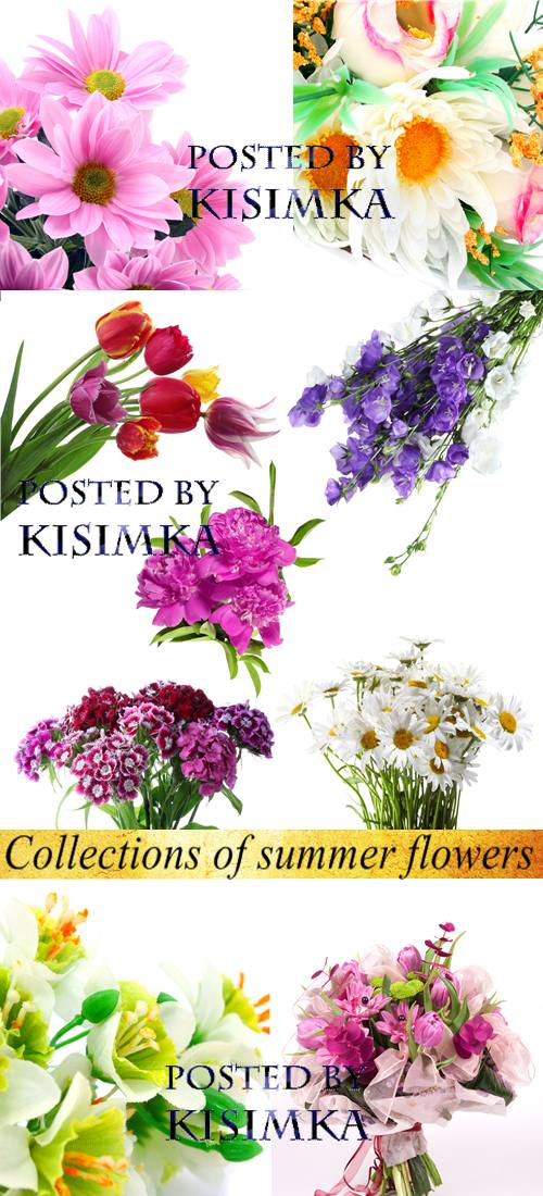Stock Photo: Collections of summer flowers