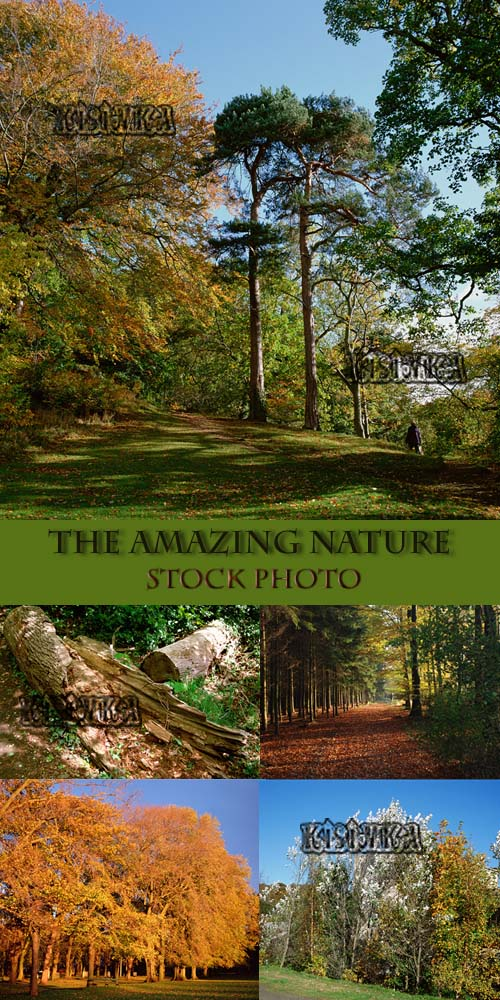 Stock Photo: The amazing nature