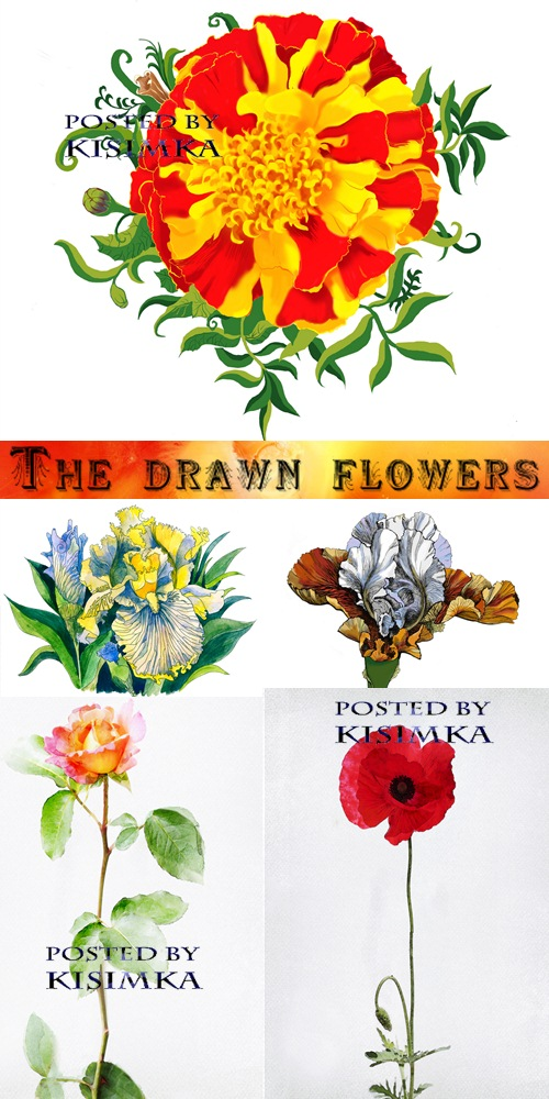 Stock Photo: The drawn flowers