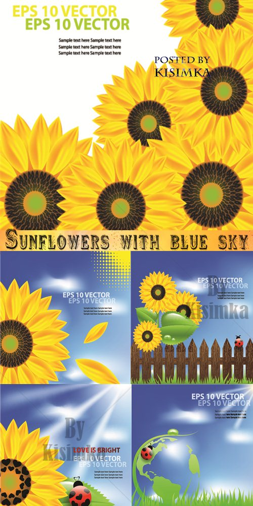 Stock: Sunflowers with blue sky