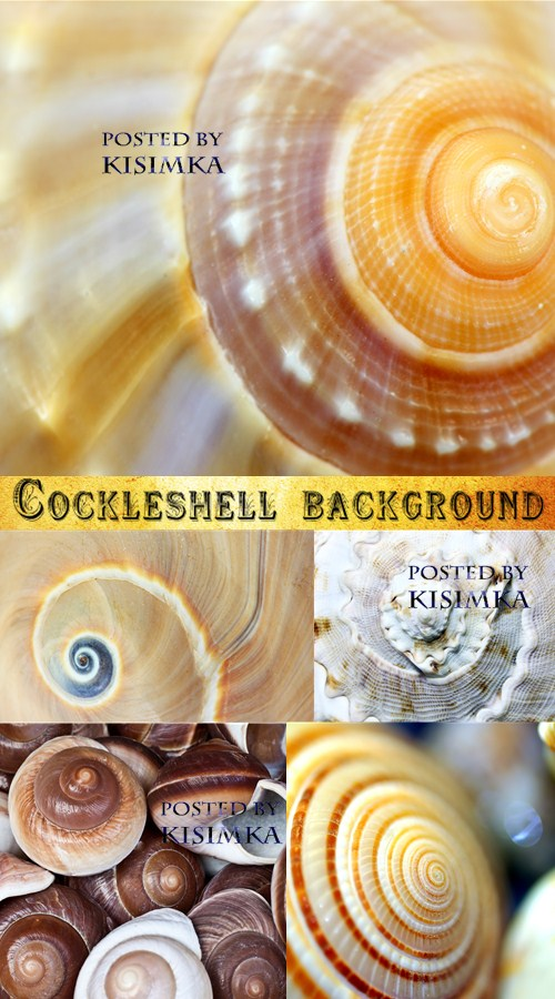 Stock Photo: Cockleshell background