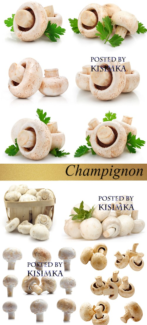 Stock Photo: Champignon