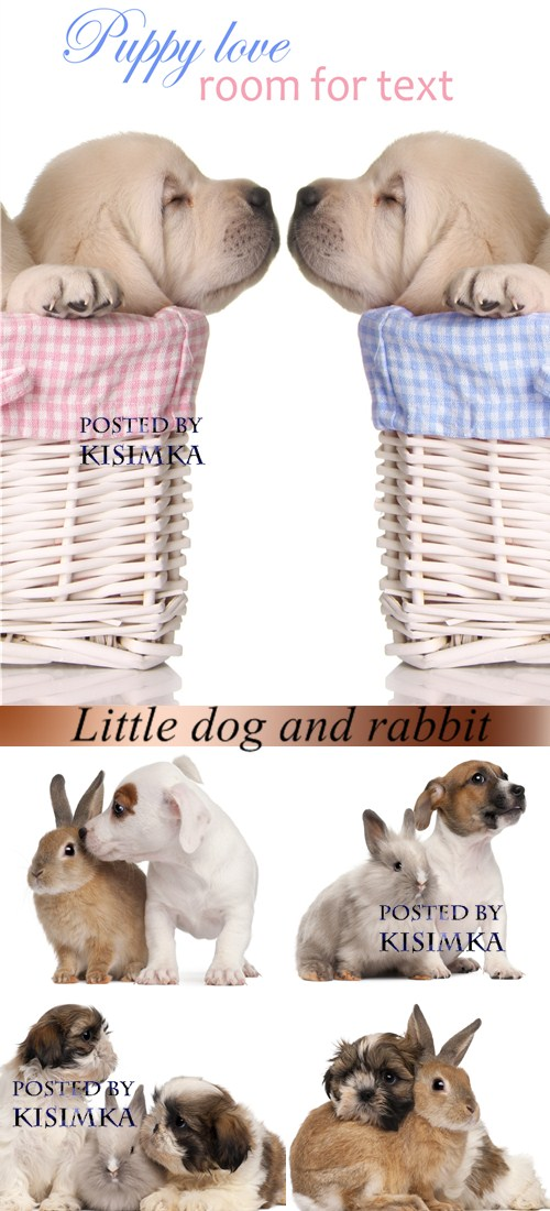 Stock Photo: Little dog and rabbit