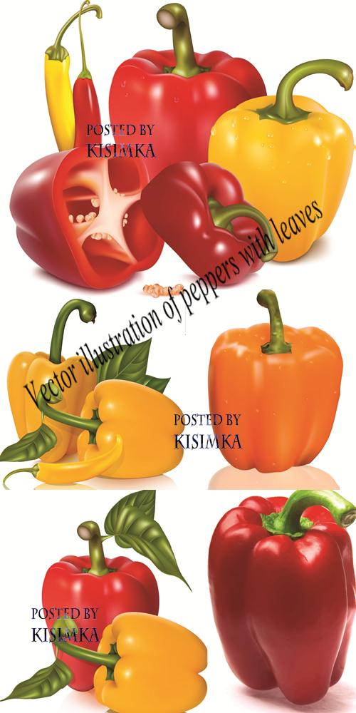 Stock: Vector illustration of peppers with leaves