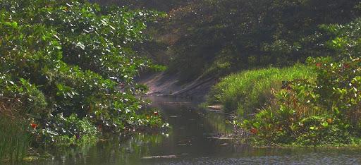 Entrada al misterio del río (Los Caracas, Caracas, Venezuela)