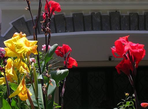 Flores en un jardín en Altamira, Caracas, Venezuela