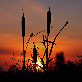 High Tails on the Prairies by Laura Bentley - Landscapes Sunsets & Sunrises ( sunset )