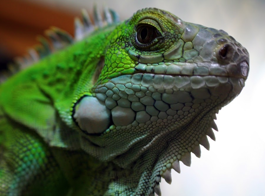 I don't want a bath by Lisa Westberg - Animals Reptiles ( snot )