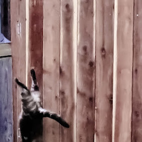 circus kitty by Serenity Deliz - Animals - Cats Playing ( cat, jumping, landing, kitty, handstand )