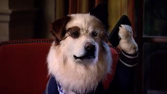 The Puppies Talk