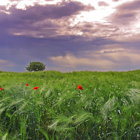 summer storm by Victor Pavel - Landscapes Prairies, Meadows & Fields ( ... )