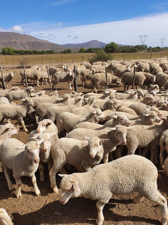 Almost 250 animals have died over a period of a year at five experimental farms run by the Eastern Cape provincial government.